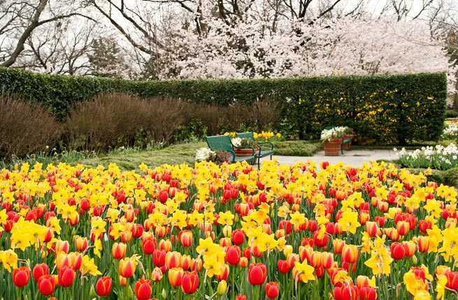 America s best spring flower festivals fodors travel guide for Tulip garden in texas