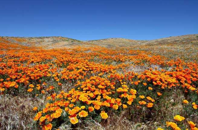 America's 10 Best Spots for Seeing Wildflowers