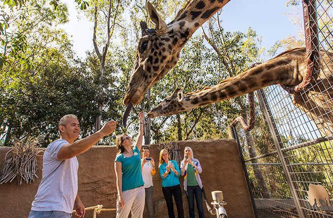 san diego zoo animal guide