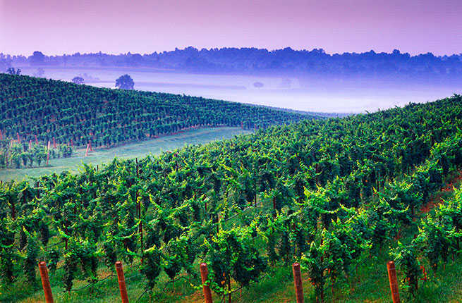 10 Under-the-Radar North American Wine Regions You Need to Visit