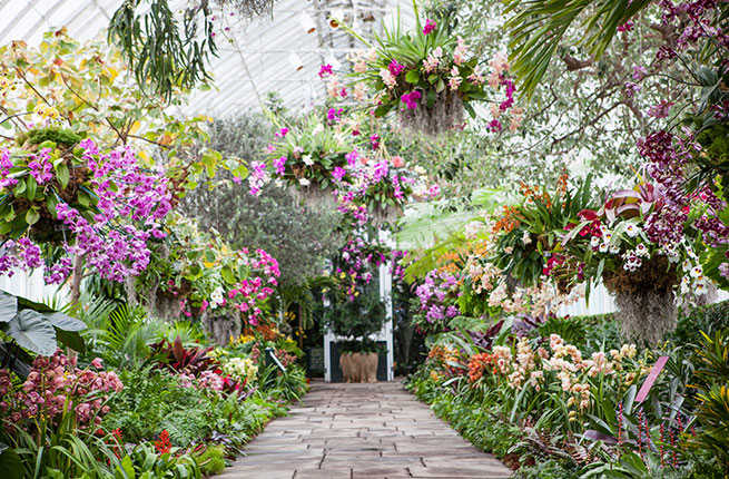 9 ways to escape winter in nyc without buying a plane - New york botanical garden tickets ...