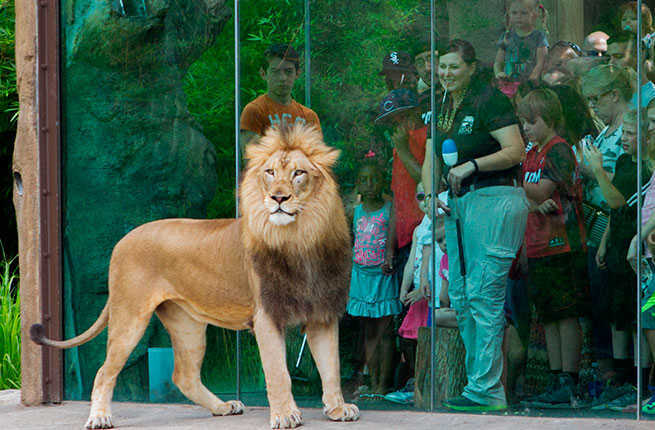 Americas Best Zoos Fodors Travel Guide - 10 of the best most fascinating zoos in the world