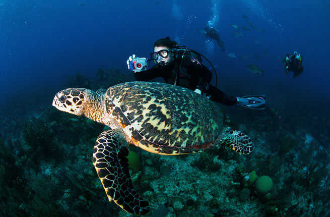 10 Best Scuba Diving Sites in the Caribbean – Fodors Travel Guide