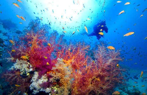 10 great scuba diving locations fodors travel guide - Padi dive locations ...