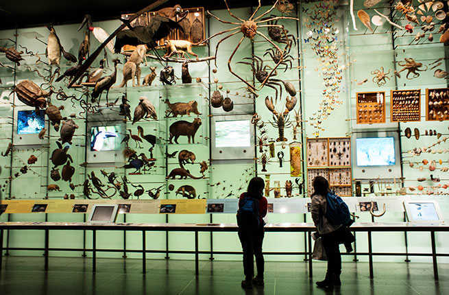 world s best natural history museums fodors travel guide