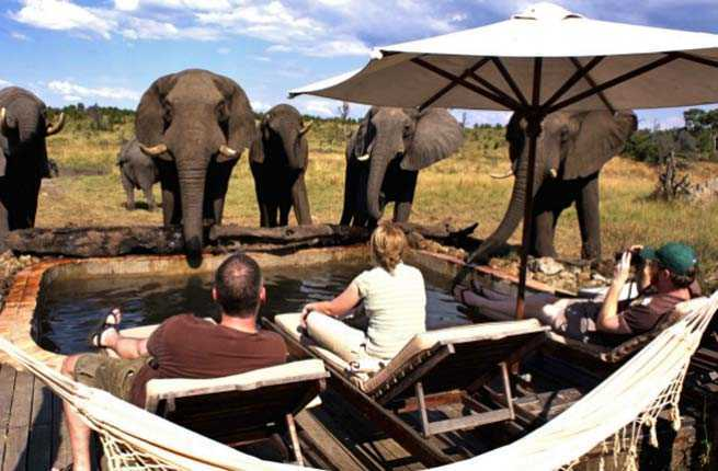10 best safari destinations in africa \u2013 fodors travel guidephoto courtesy of african bush camps