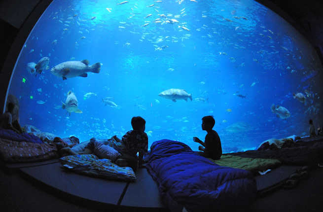 World S Coolest Underwater Lodgings Fodors Travel Guide