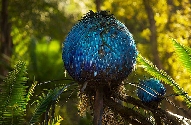 12 Of The Coolest Things At Disneys New Avatar Themed Park Fodors