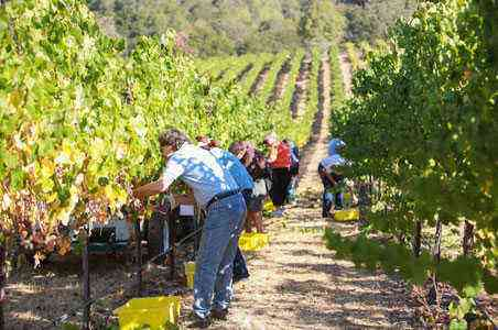 Just Back From: Sonoma County Grape Camp – Fodors Travel Guide