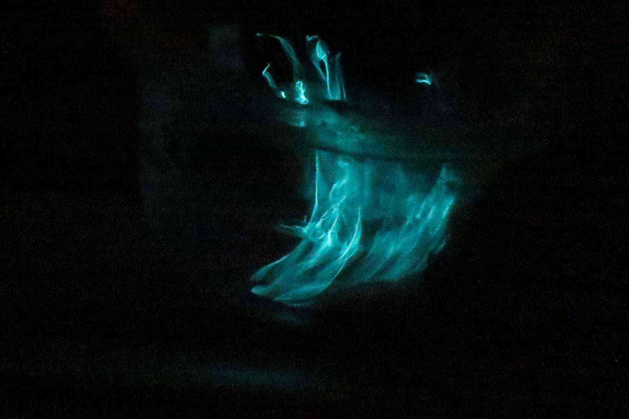 Bioluminescent-Wonders-USBVI-Comb-Jelly