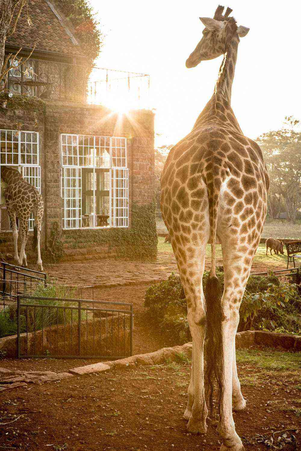 Rooms: 15 Hotels Where Mammals Rule The Grounds