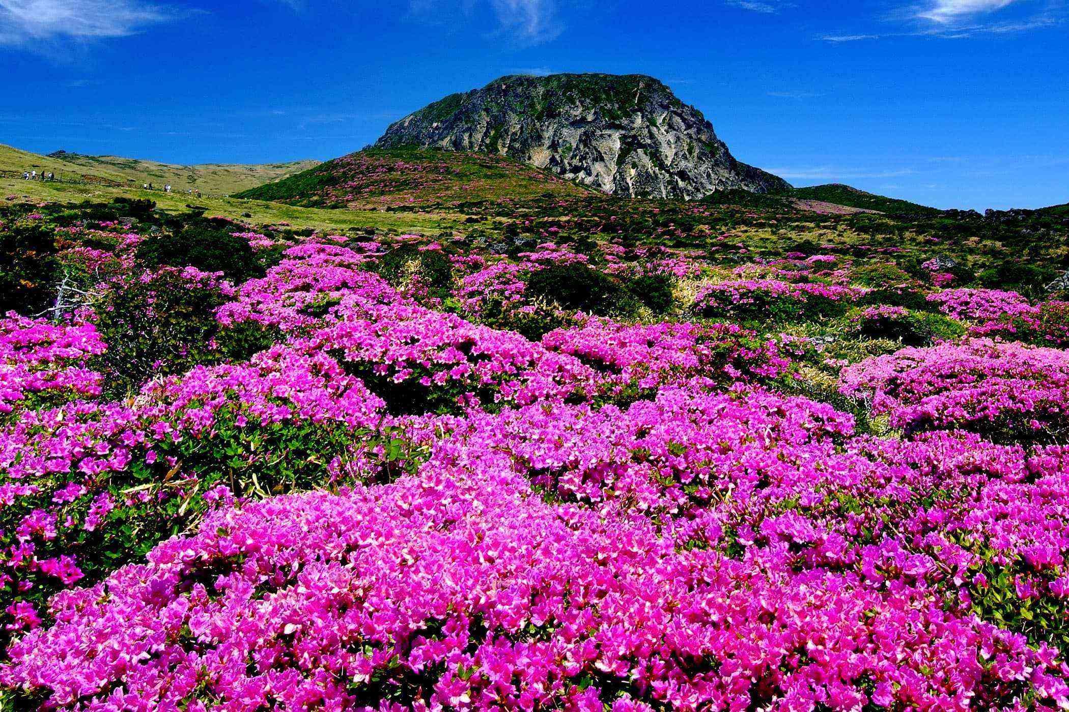 Jeju-Island-Mount-Halla