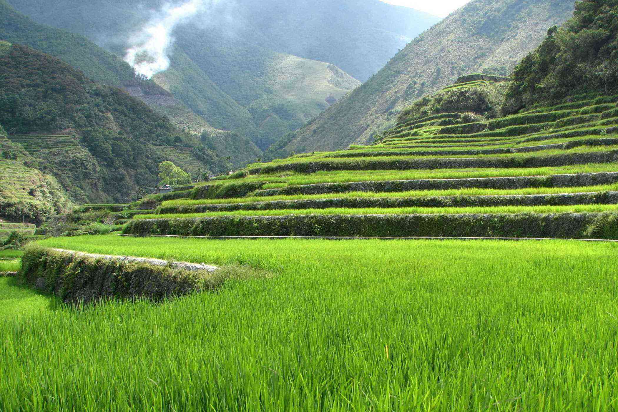 Natural-Philippines-Rice-Terraces