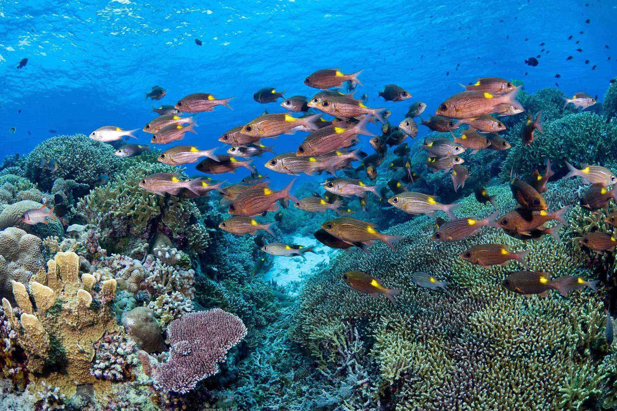 Bright reef