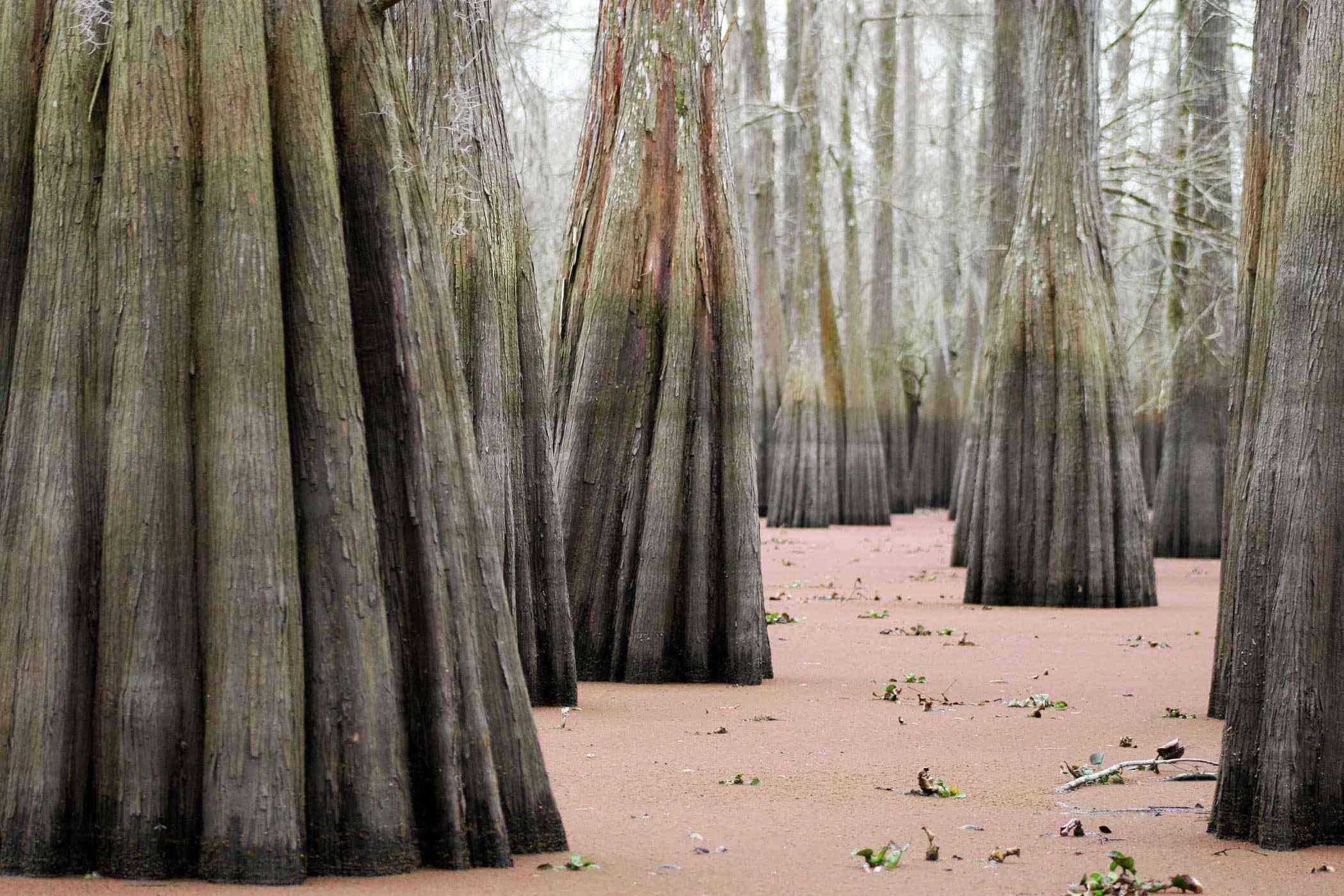 Surreal-Landscapes-Atchafalaya-Basin-1