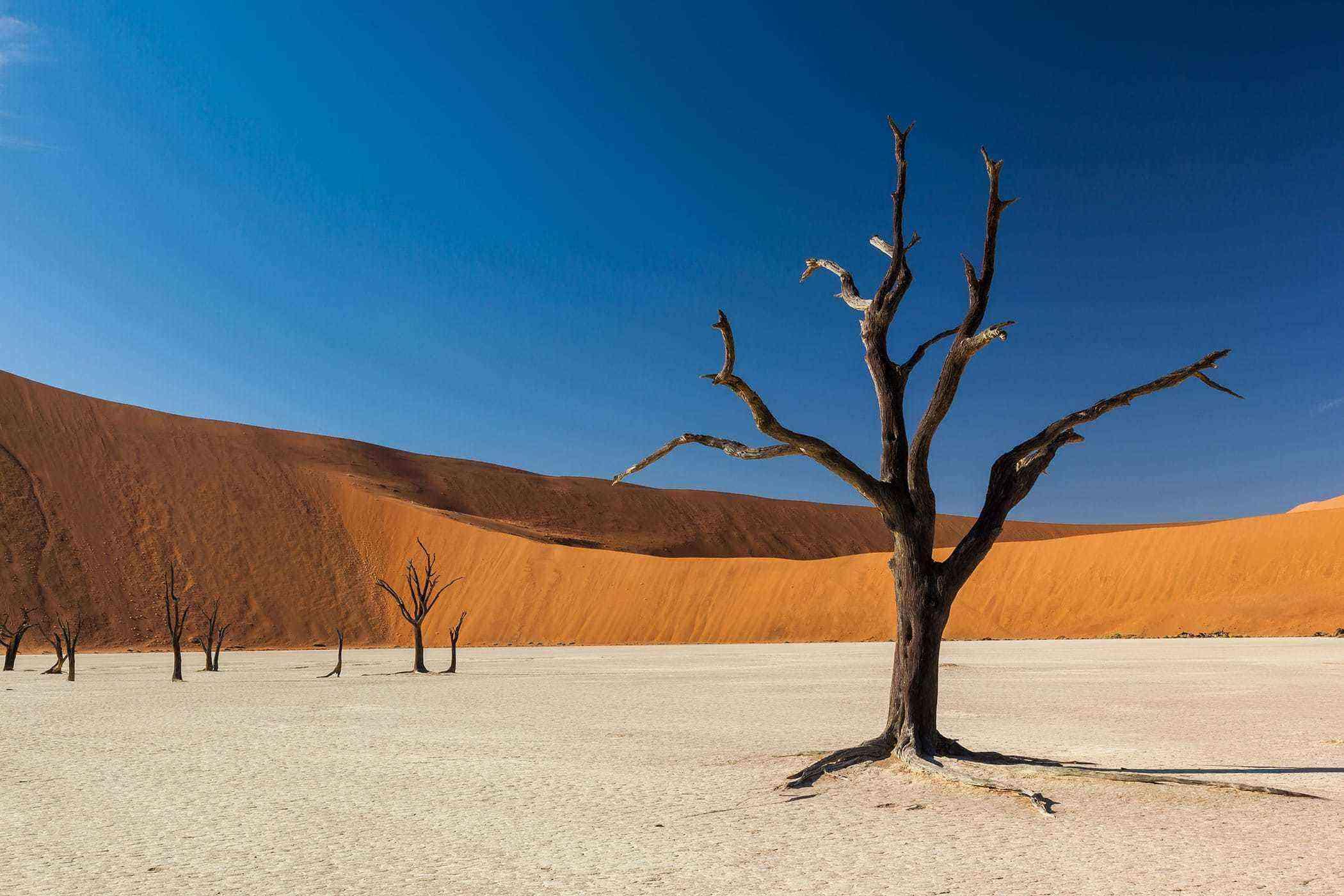 Surreal-Landscapes-Namib-Desert