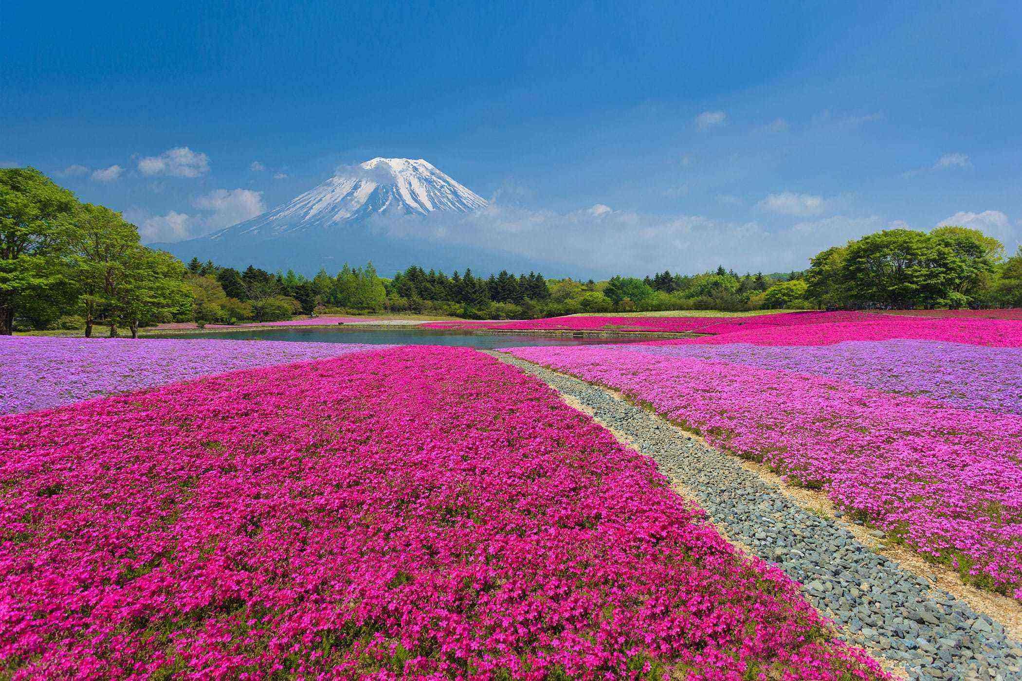 Surreal-Landscapes-Shibazakura