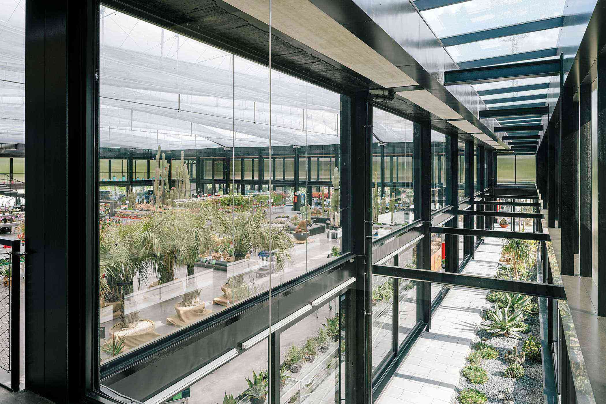 New desert city in madrid has over 400 species of cactus - Garden center madrid ...
