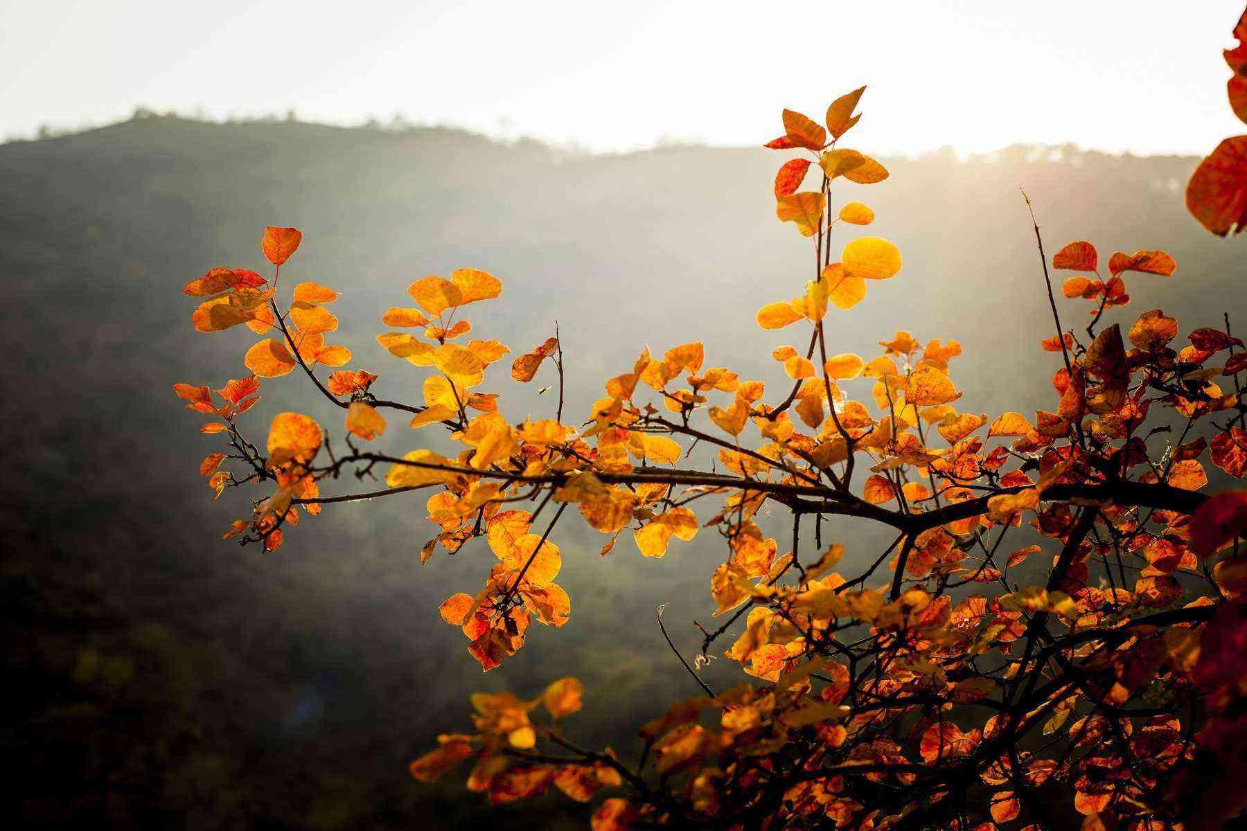 beijing-leaves