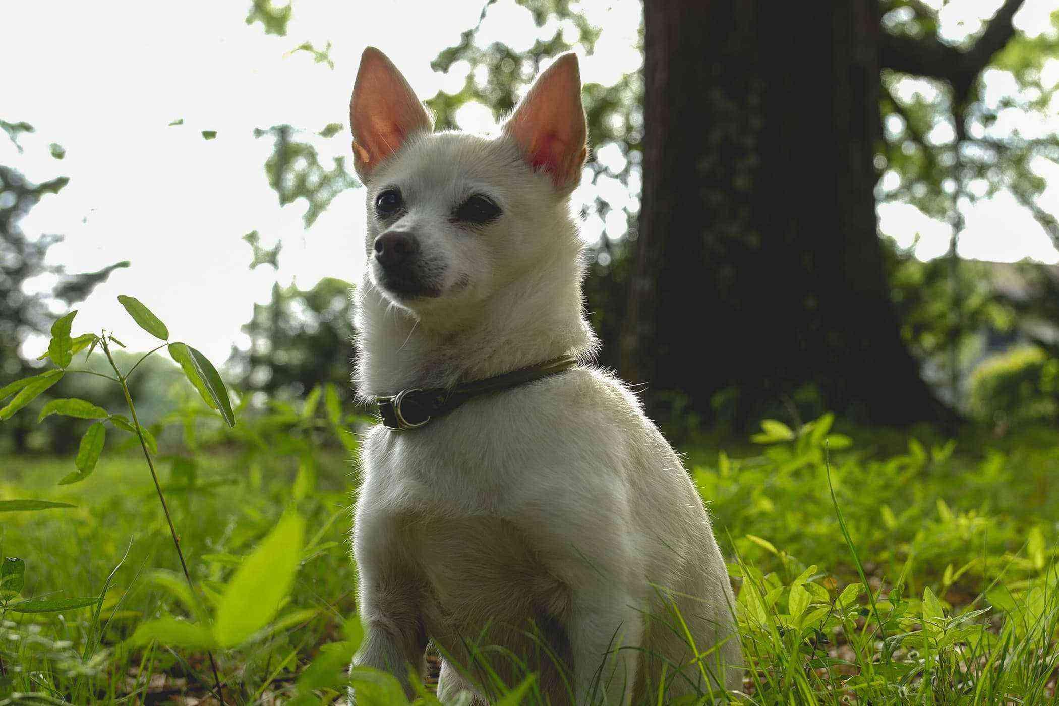 Yuki the dog.