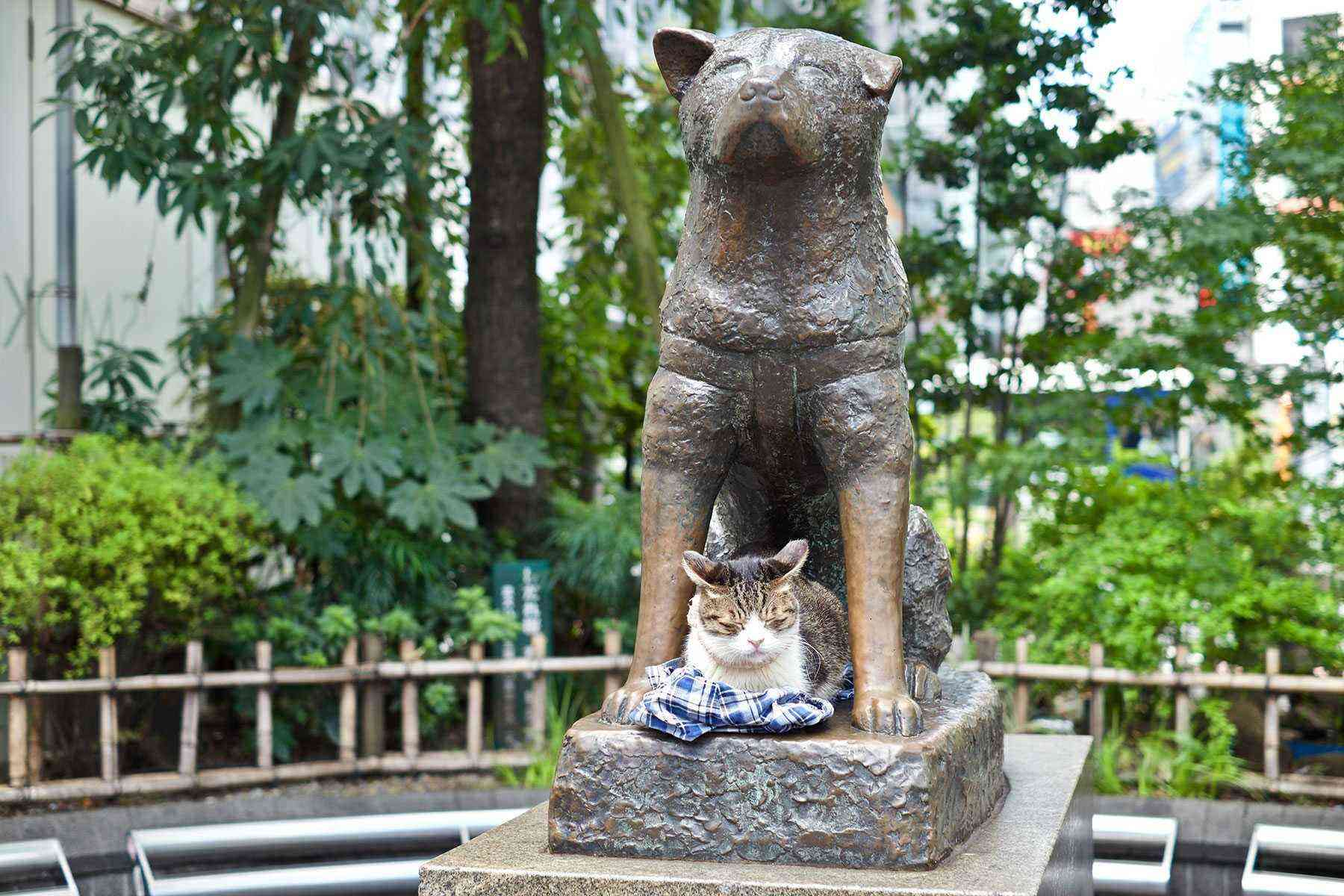 memorable mutts 11 dogs monuments around the world