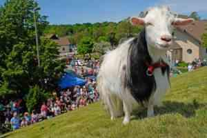 Goat-Activities-hero