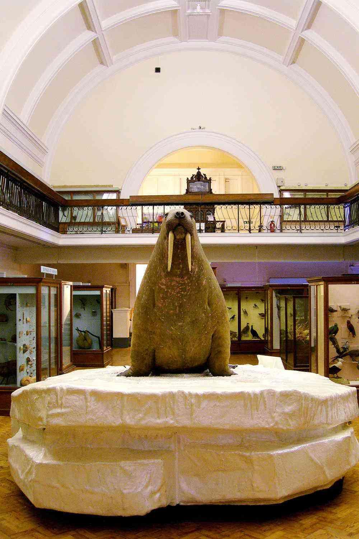 Under-The-Radar-London-Horniman-Museum-3