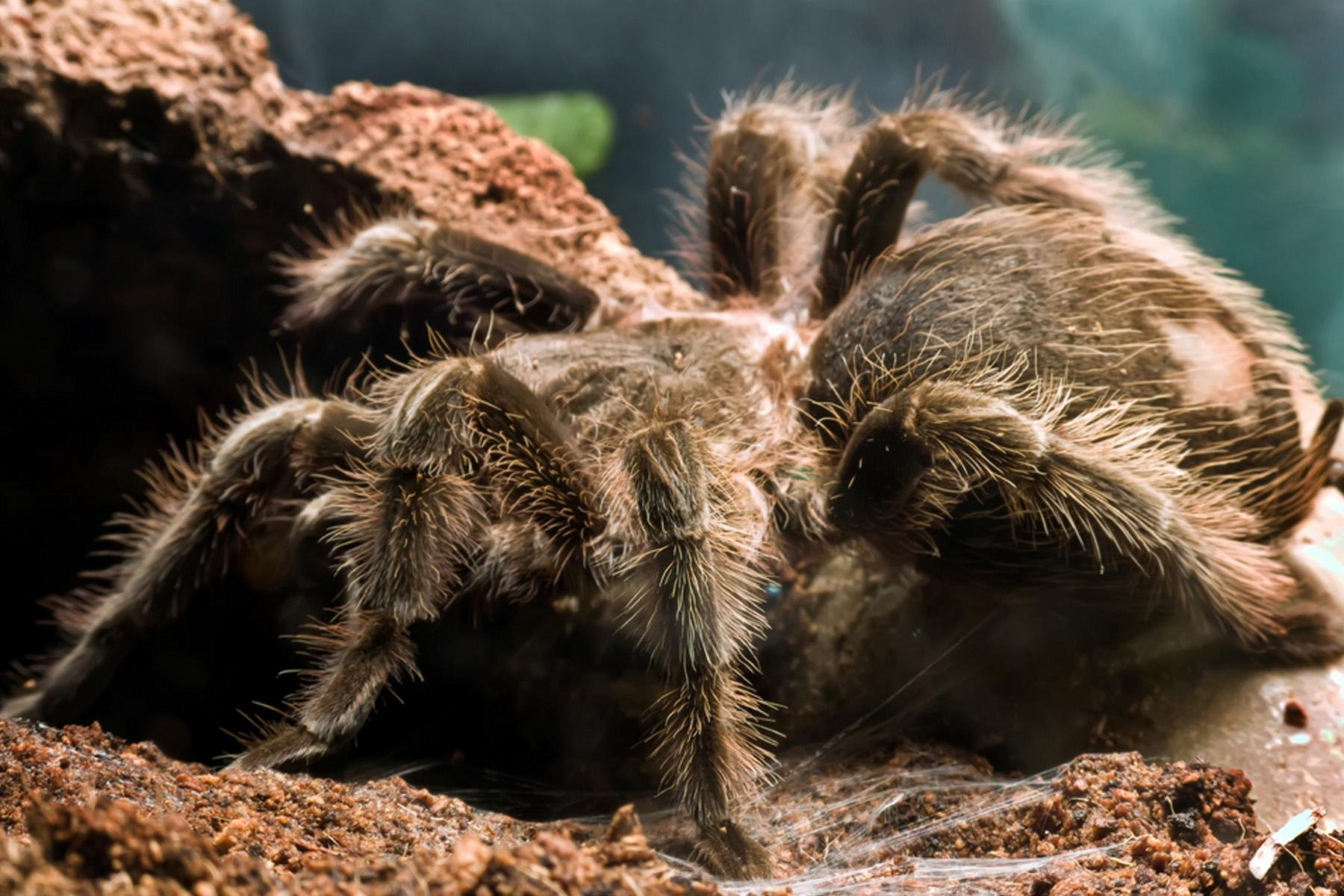 10 Places to Find the World's Deadliest Spiders