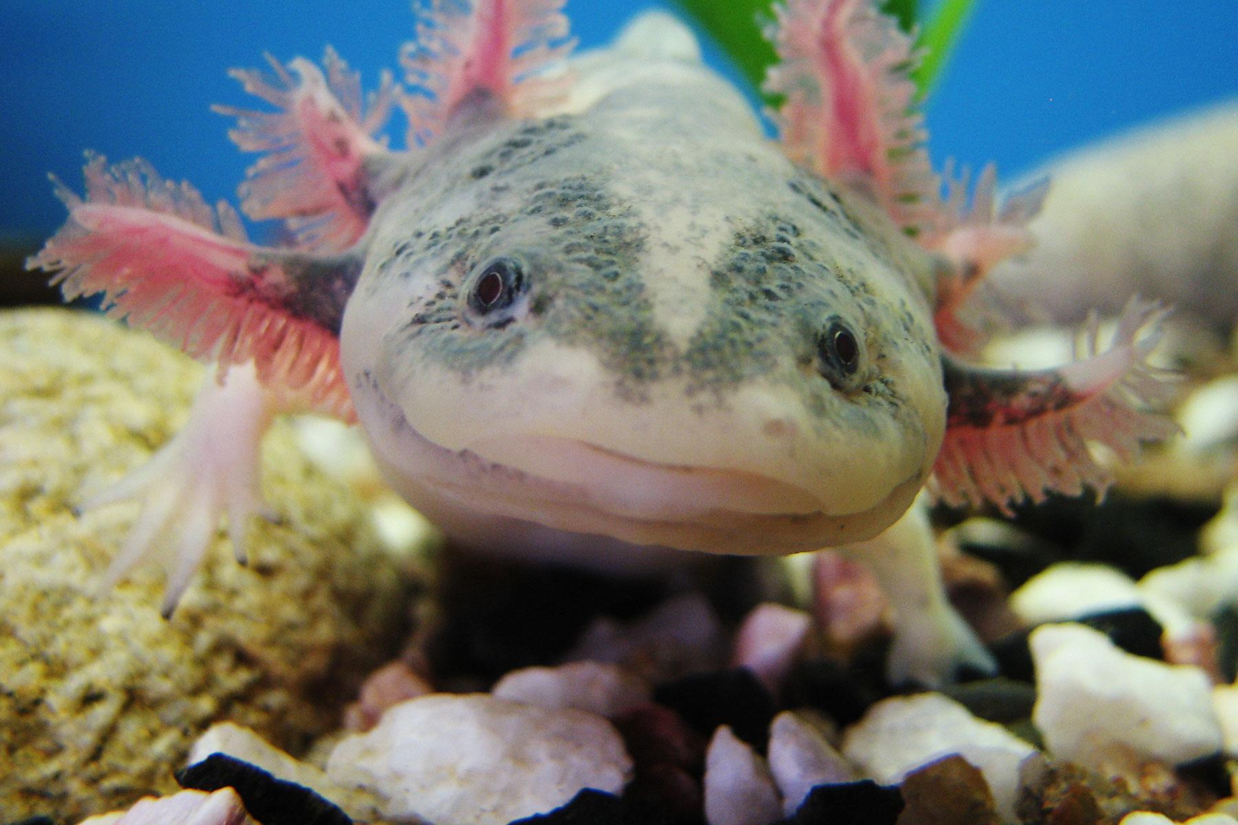 Where to See the Worlds 10 Weirdest Animals - Fodors