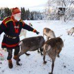 sami-feed-reindeer