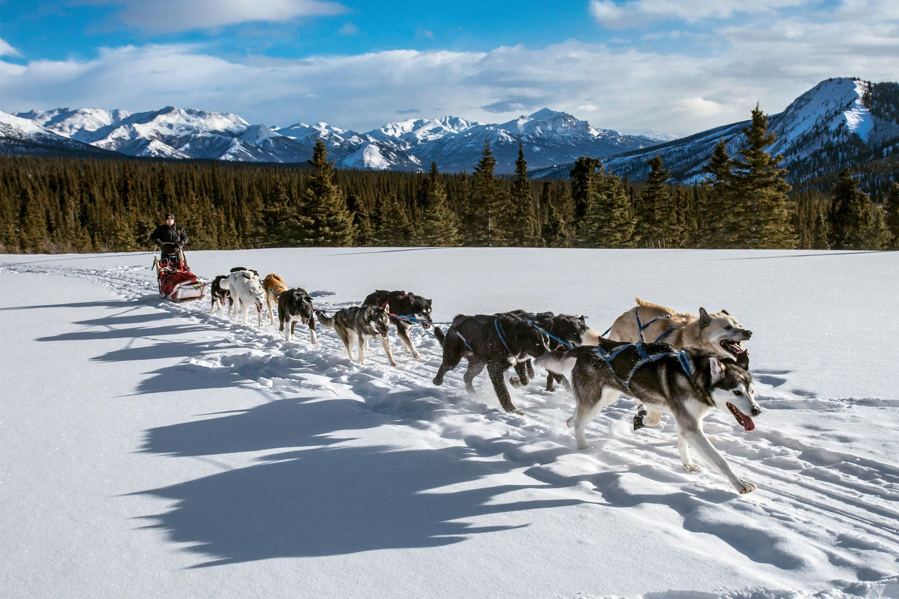 Service Dogs In National Parks