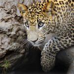12 Amazing Animals to See in Sri Lanka