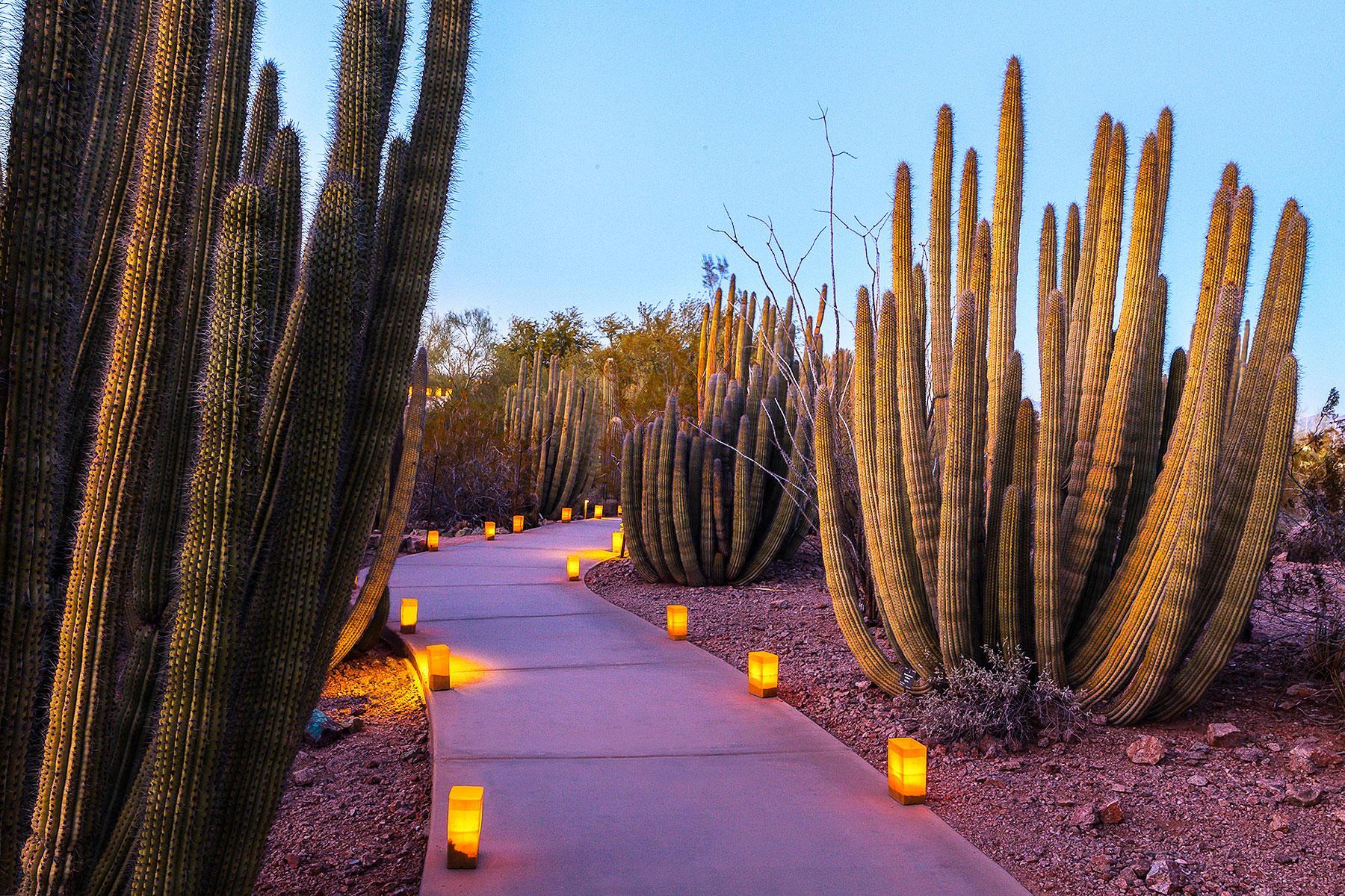 13 festivals at botanic gardens 2018 - Garden of lights botanical gardens ...