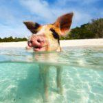 20 Ultimate Things to Do In The Bahamas