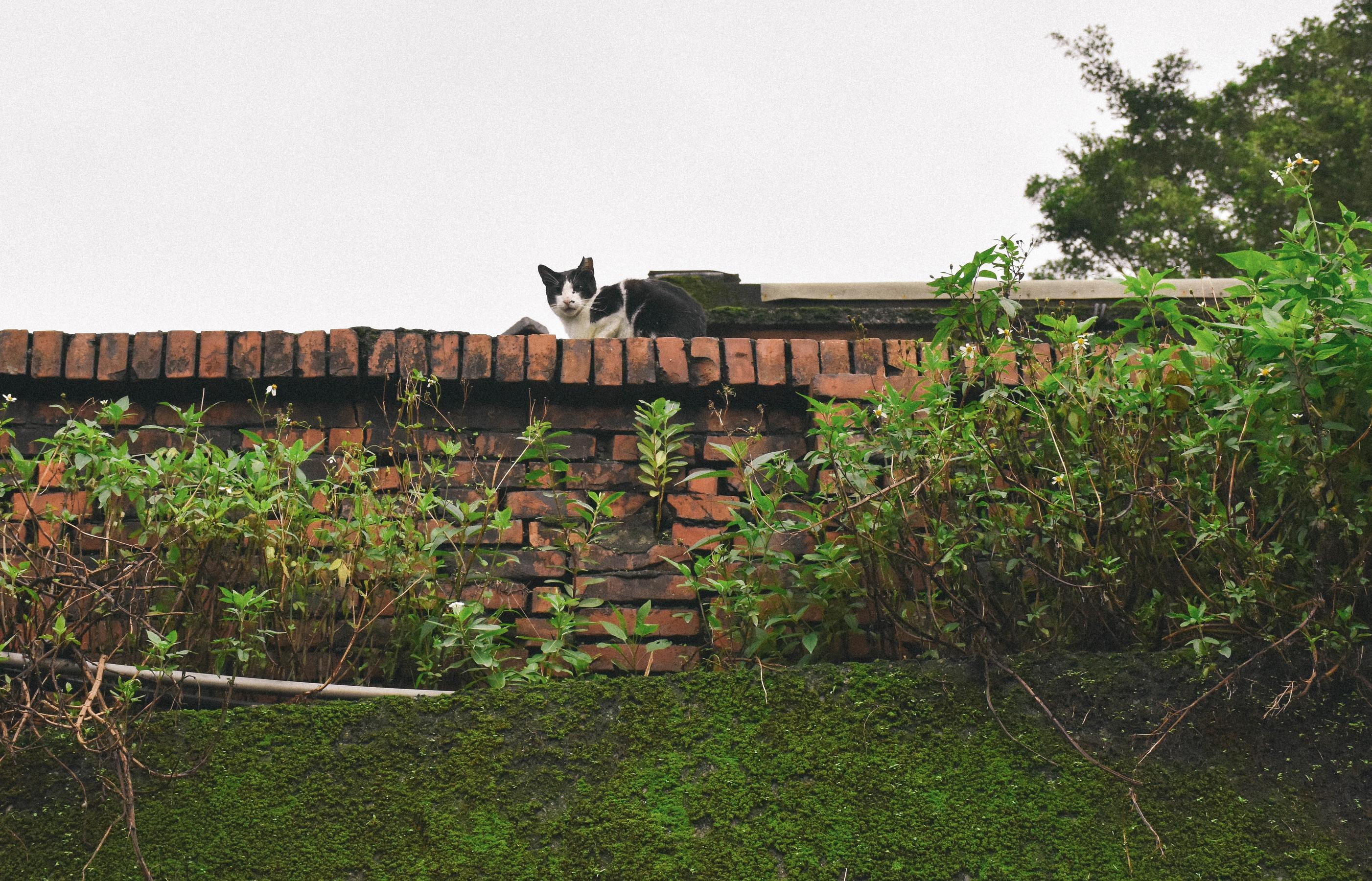 cat_38684420072_o