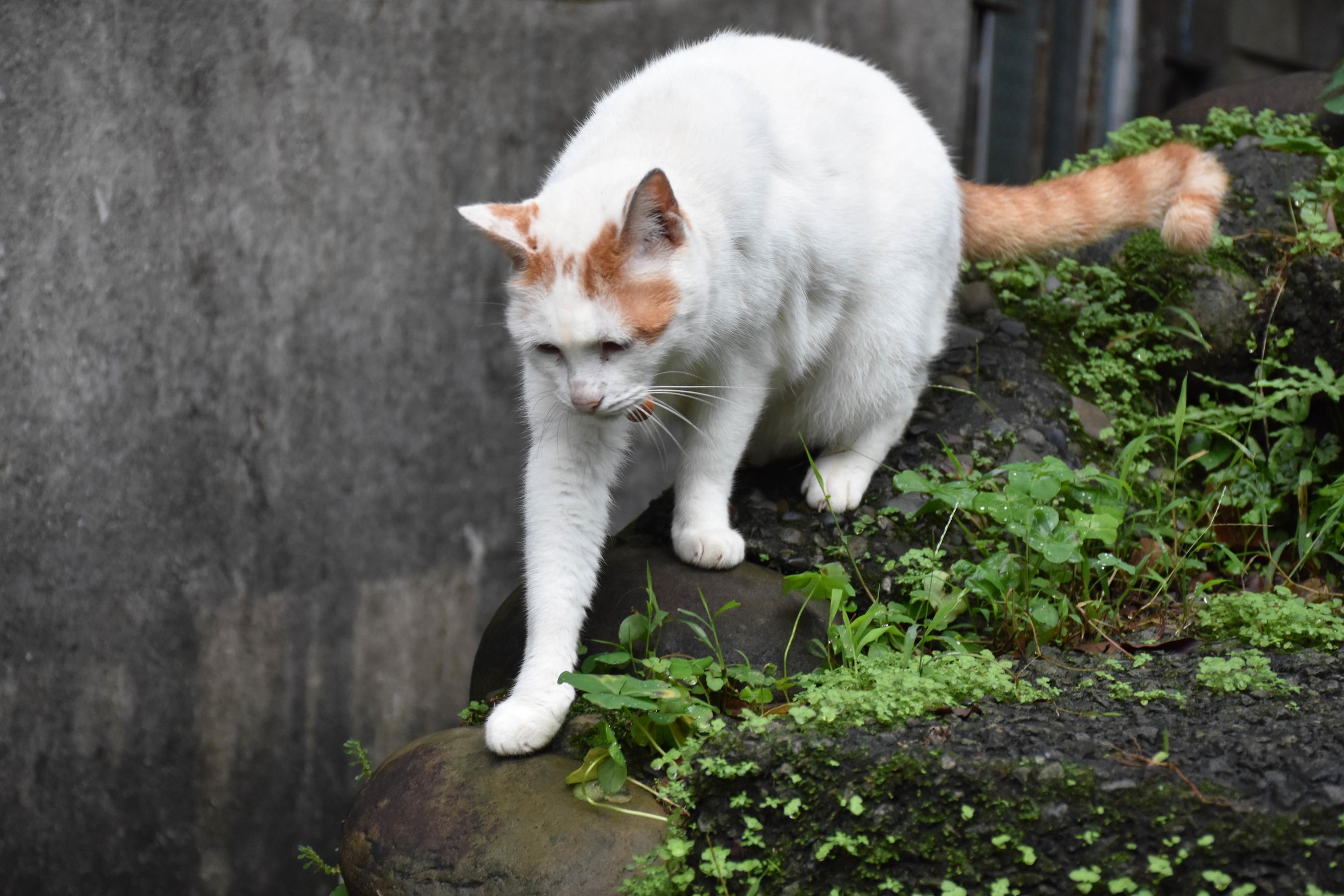 cat_26940718319_o