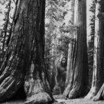 Mystical-National-Parks-Redwoods-1