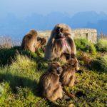 Elusive and Endangered Animals to See in Ethiopia While You Still Can
