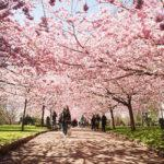 9 Gorgeous Spring Blossom Festivals Around the World