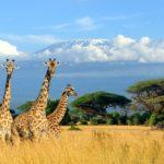 How to Fly Business Class to Africa for the Price of An Economy Ticket