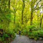 11 Unforgettable Moments in New Zealand Fiordland