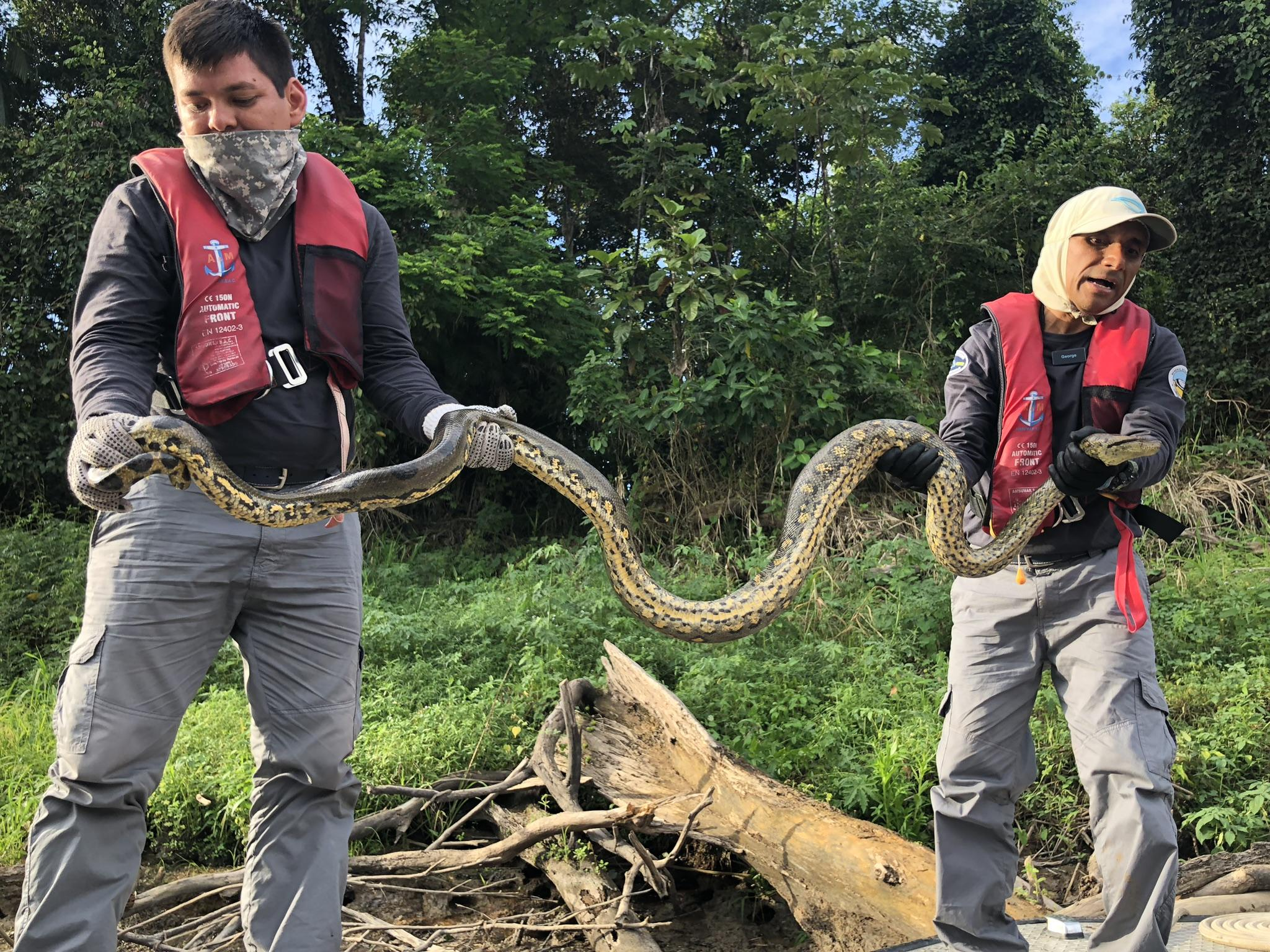 Show and tell 2 with a 16 foot anaconda