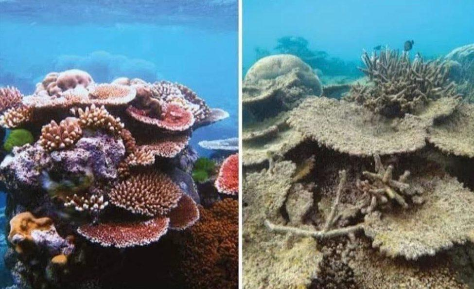 coral reef challenge
